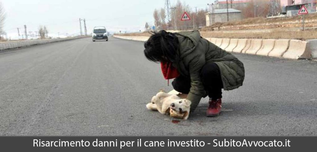 risarcimento danni cane investito